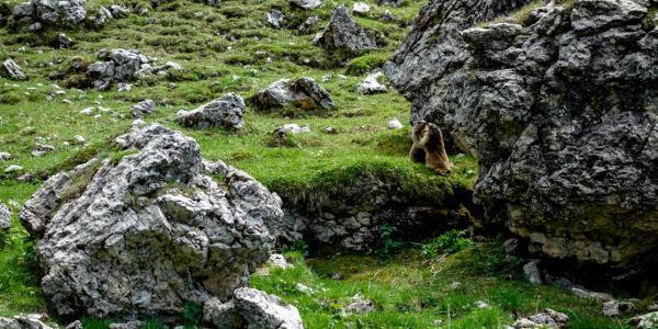 Murmeltiere unterhalb des Schlern