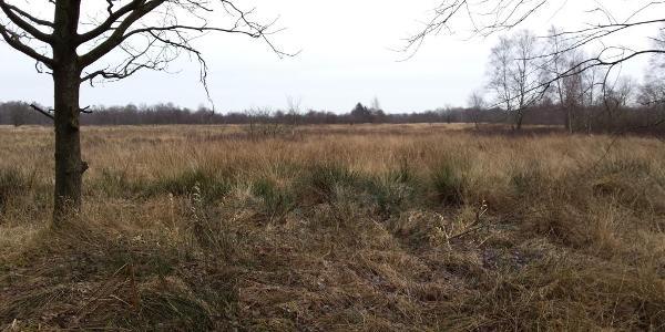 Im Moor östlich von Satrup (bei 16km)