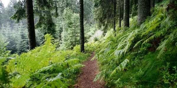 Unterwegs auf Waldpfaden
