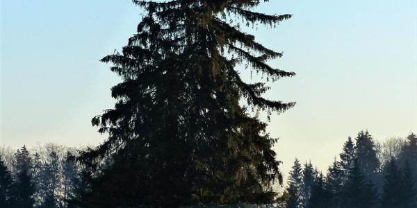 Blick auf das Weidenholz