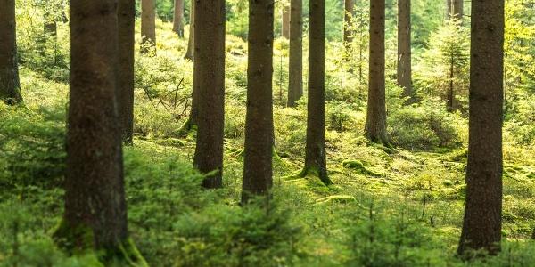 Unendlich scheint der Wald Rodt