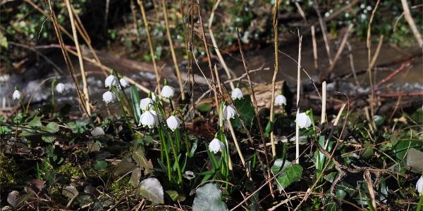Valle della Primavera