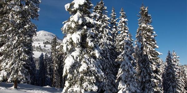 Winterfeeling in Aldein und am Weisshorn