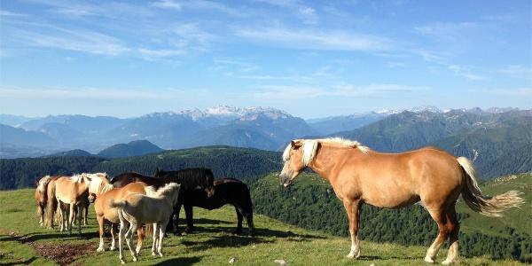Alpine pasture Monte Luco