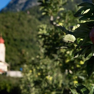 Round trip through the apple orchards