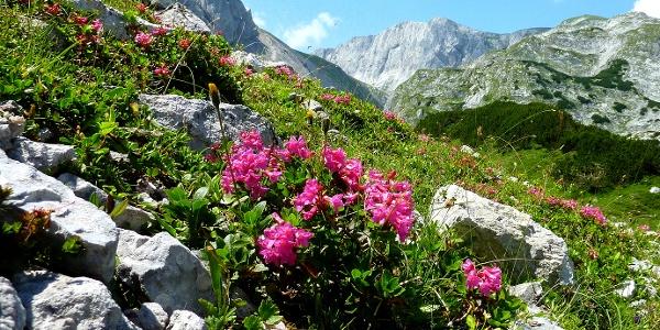 Blumenpracht am Weg nach Seewiesen