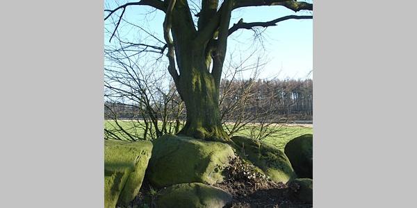 Steingräber im Doppelpack: Die langgestreckten Bauwerke (16 und 20 Meter) liegen unmittelbar nebeneinander
