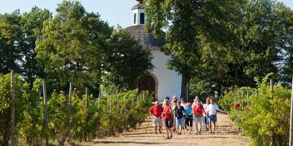 Nordic Walking zwischen den Weingärten