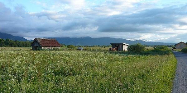 Loisach-Kochelsee-Moor bei Benediktbeuern
