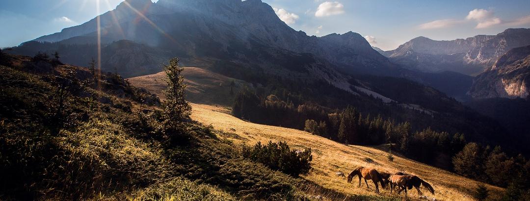 Konji na Prijevoru