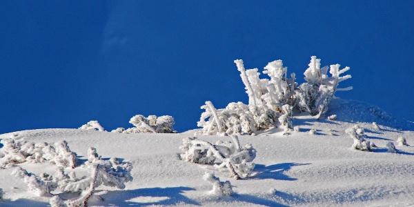 Winterliches am Kamm des Gruber Hinkogels