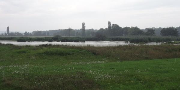 Storchenhorst im Hintergrund
