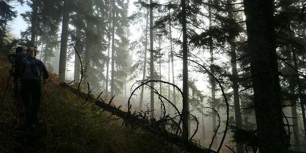 Aufstieg aus dem Nebel