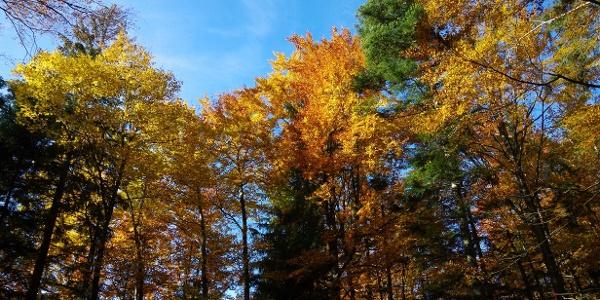 Die Voralpen - perfektes Vor- und Nachsaisonsprogramm