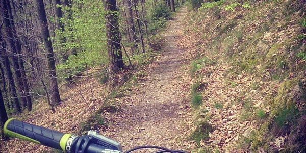Trail bei Dahl
