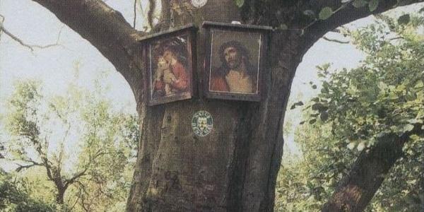 """Bilderbaum (historisches Bild aus """"950 Jahre St. Valentin"""""""