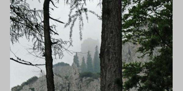 Im Lärchenwald oberhalb des Mitterstandes