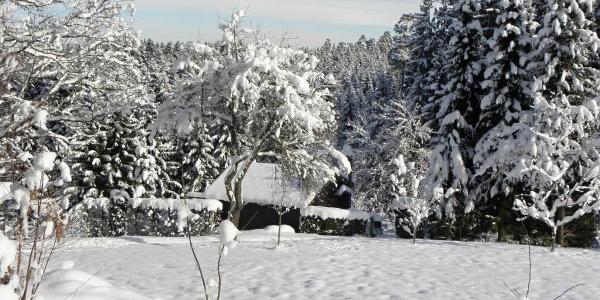 Winterlandschaft beim Spechtloch