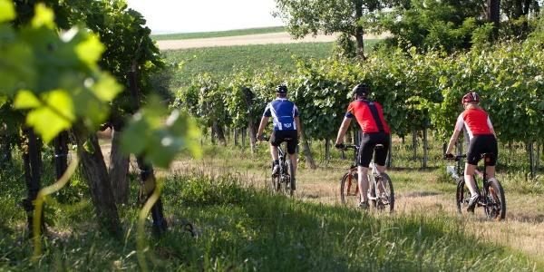 Durch den Weingarten radeln