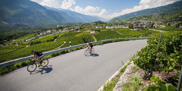 Vineyards between Salgesch and Varen