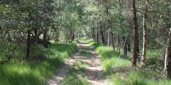 Weg durch den Hahlener Moorwald