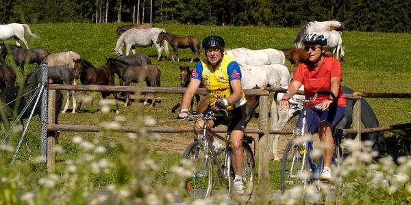 Radfahren bei den Lipizzanerheimat