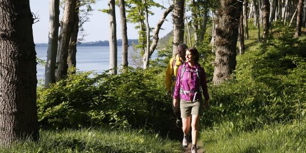 Natur pur: Auf dem Bodden-Panoramaweg ist alles im grünen Bereich