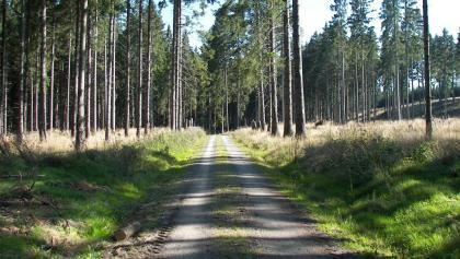 Wanderweg durch den Wald