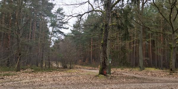 Im Wald an einem überdachten Rastplatz