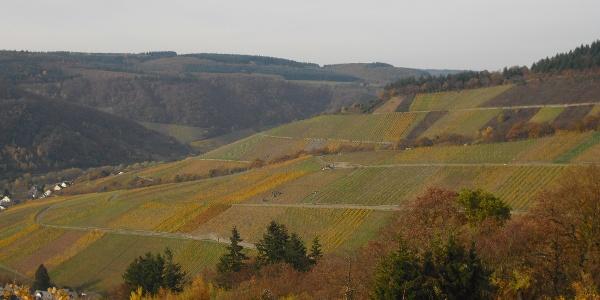 Blick auf die Weinlage Monteneubel