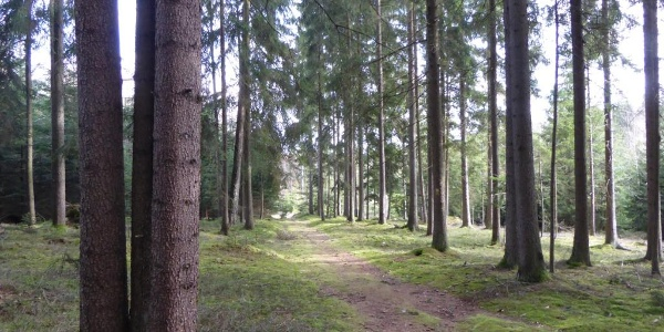 Waldweg vor Steegen