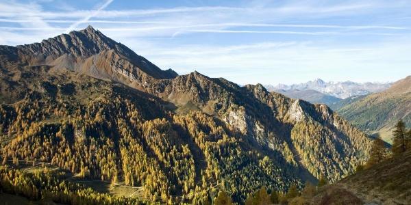 Bereits über der Waldgrenze - auf der anderen Seite kann man den Forstweg für den Abstieg erkennen