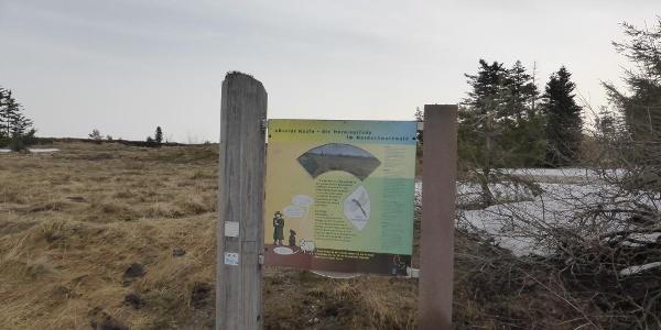 Infotafel am Hochmoor der Hornisgrinde