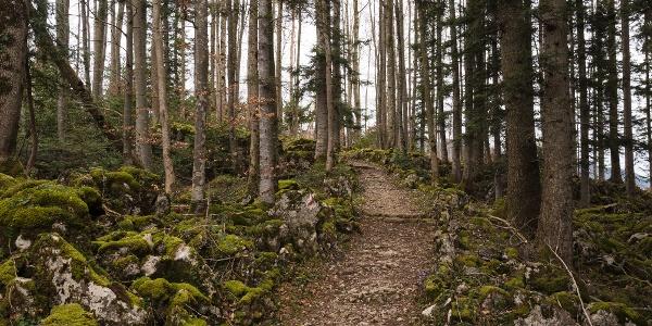 Herrlicher Weg durch den lauschigen Wald