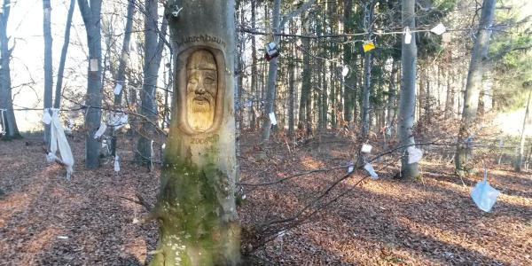 Gielsberg - Zauberwald