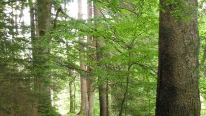 Trail bei Musbach
