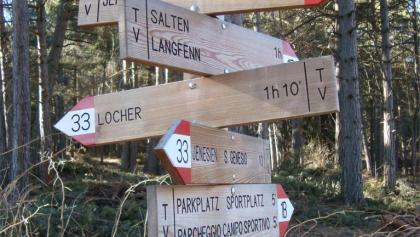 Nordic Walking: San Genesio - Montoppio