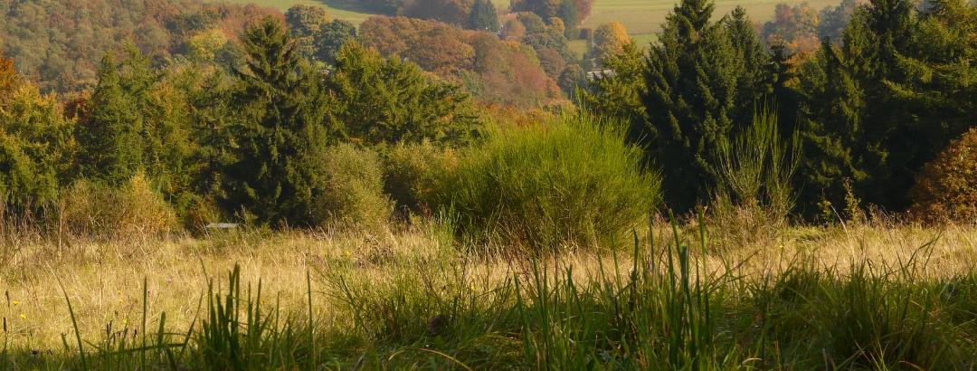 Typische Landschaft aus Wäldern und Weiden im Niederbergischen Land