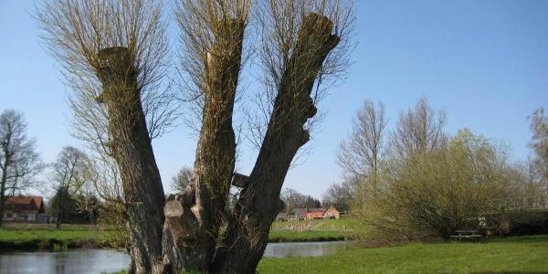 Weide an der Örtzebrücke in Eversen