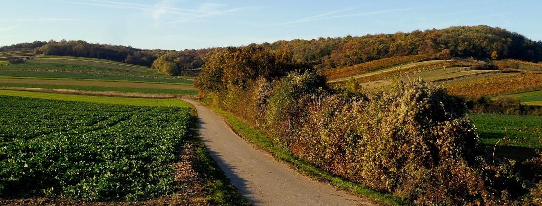 Das Burgenland im Herbst