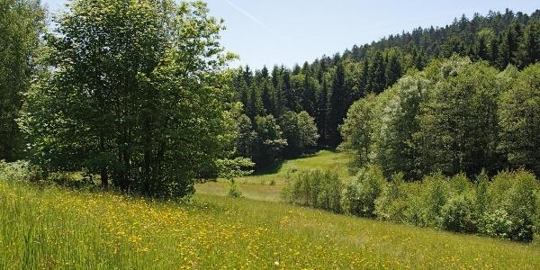 Bachlandschaft vor Grünmühl