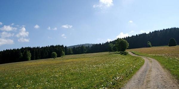 Rückschau zum Weg von St. Bernhard