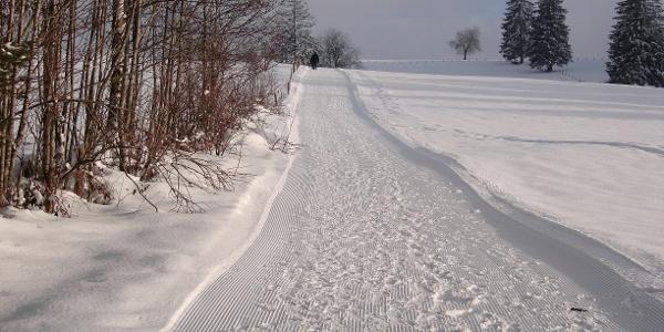 Winterlandschaft am Hanusel Winterwanderweg (6)