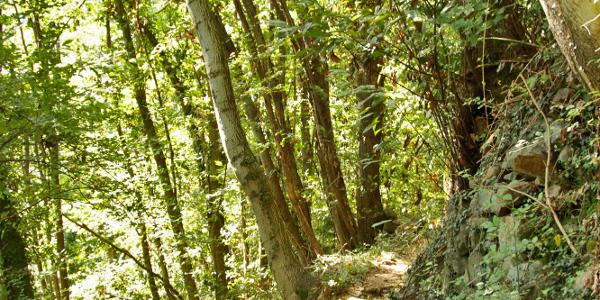 Narrow footpath in the forest
