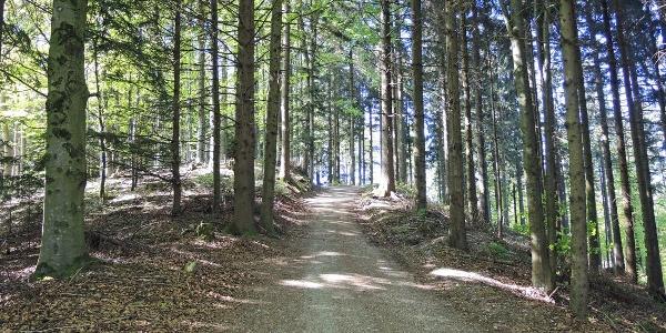 Die letzten Schritte zum Göblberg.