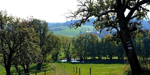Idyllischer Sattel zwischen Moarhof und Goin