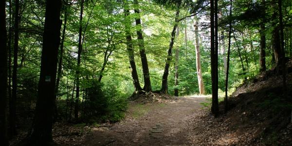 Waldweg im Schatten