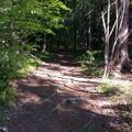 Einfahrt in den Wald