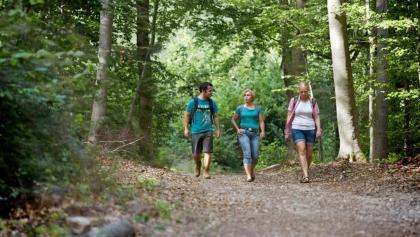 Im Langenlonsheimer Wald auf der Vitaltour Wald, Wein & Horizonte