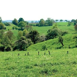 Wiesenlandschaft um Bendorf